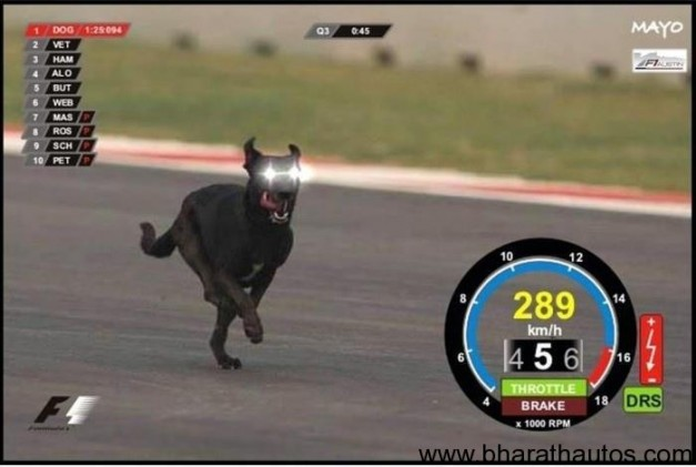 Stray dogs on the track interrupted F1 Indian GP free-practice
