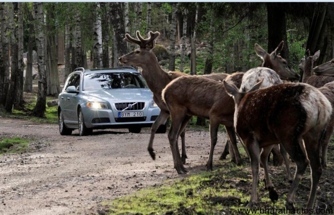 Volvo working on safety feature to avoid collision with wild animals