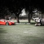 Lamborghini Aventador with an Elephant - 007