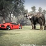 Lamborghini Aventador with an Elephant - 008