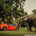Lamborghini Aventador with an Elephant - 002