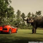 Lamborghini Aventador with an Elephant - 003