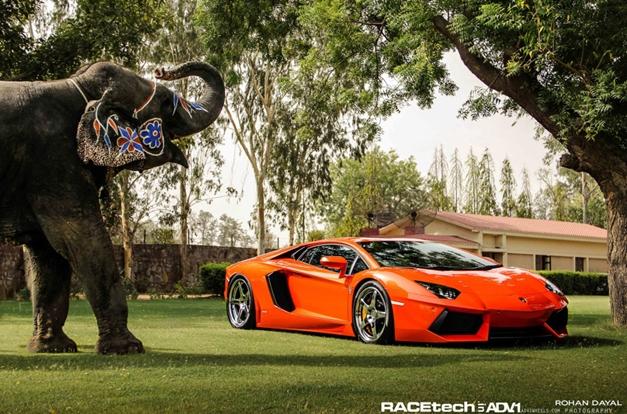 Lamborghini Aventador with an Elephant - FrontView