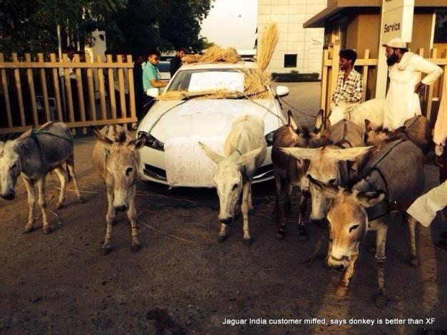 donkey-better-jaguar-xf-india